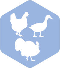 RUMA Poultry meat icon
